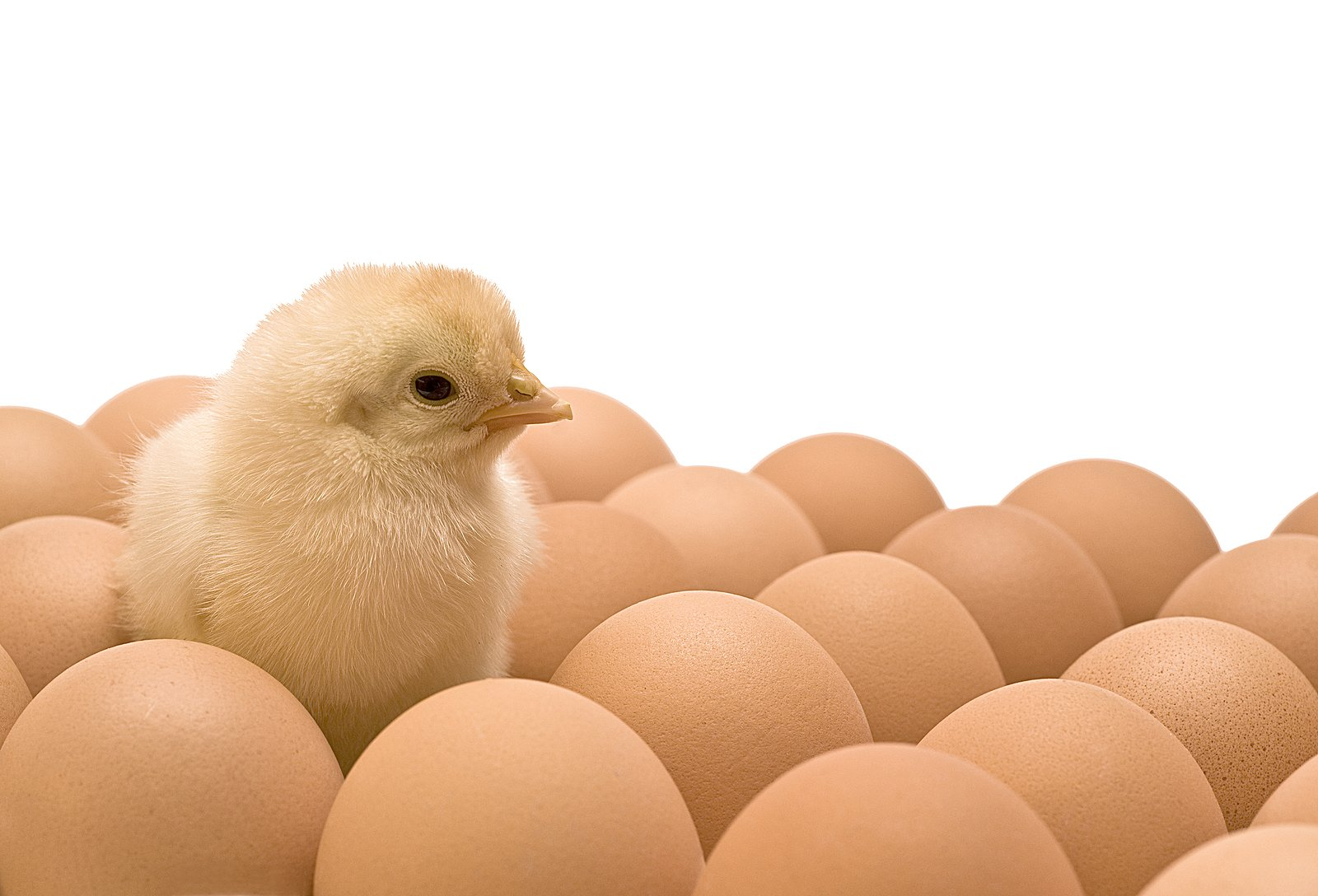 Movie Theaters Chicken or the Egg