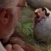 Pee-Wee Jurassic Park