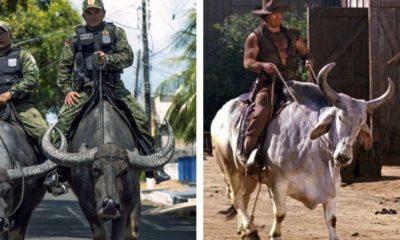 Brazilian Police Water Buffalos Mongo