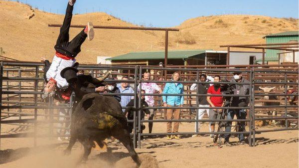 Jackass Forever Johnny Knoxville Bull