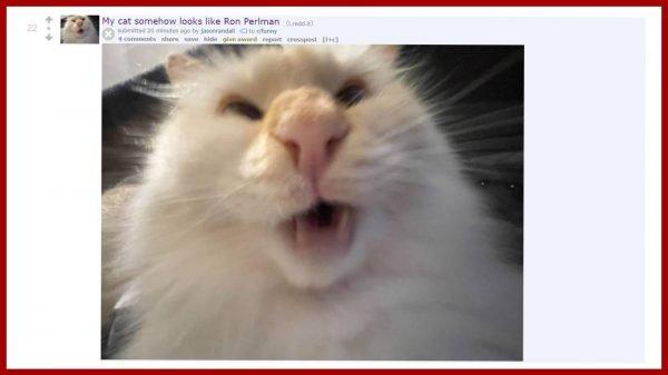 Ron Perlman Cat